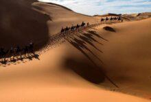 الصحراء في المنام
