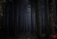 تفسير رؤية الغابة المظلمة في المنام