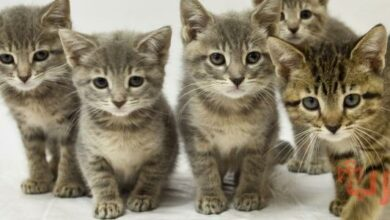 تفسير رؤية القطط في المنام والخوف منها
