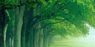 https://www.arab-box.com/the-green-forest-in-a-dream/