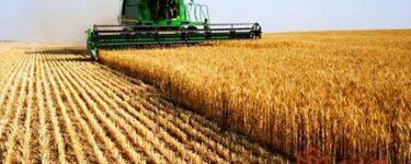 تفسير حلم حصاد القمح في المنام