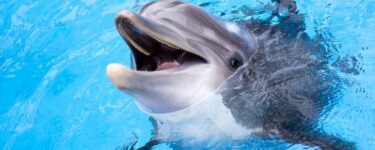 تفسير حلم الدلفين في المنام لابن سيرين