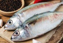 تفسير حلم السمك العادي والملون في المنام للمتزوجة والعزباء والمخطوبة