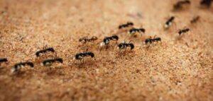 تفسير حلم رؤية النمل في المنام لابن سيرين