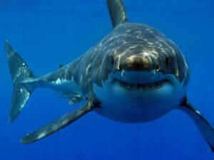 تفسير حلم سمكة القرش في المنام