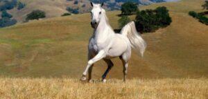 تفسير رؤية الحصان الأبيض في المنام