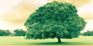 تفسير رؤية الشجرة فى المنام لابن سيرين