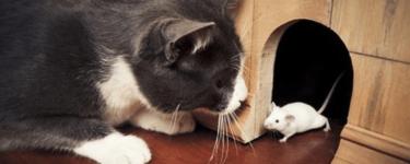 تفسير رؤية القطط والفئران في المنام لابن سيرين