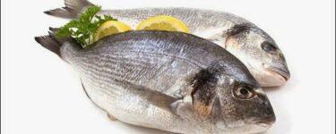تفسير رؤية السمك في المنام لابن سيرين